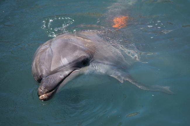 Дельфин 2 сезон  — дата выхода на НТВ, анонс новых серий